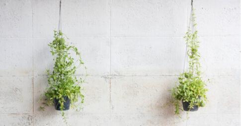 壁掛け観葉植物