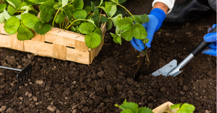 観葉植物と土
