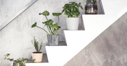 屋外におすすめの観葉植物15選!玄関やベランダなど置き場所別でご紹介