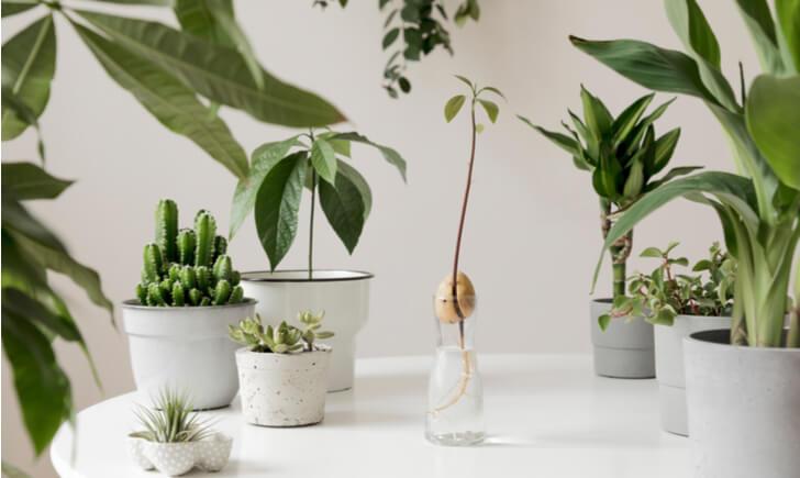 デスクに観葉植物を置くメリット・効果