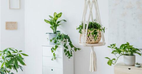 プラントハンガーで植物を吊るして楽しもう!簡単な作り方やおすすめの商品もご紹介
