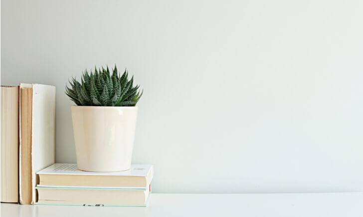デスクで観葉植物を育てるときのポイント