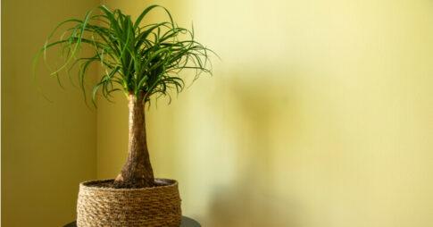 トックリランの風水効果を解説!置き場所と方角を知ろう【観葉植物】