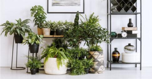 観葉植物 棚