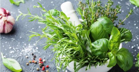 無農薬でも育てやすい7種のハーブ|楽しく育てて料理に取り入れてみよう