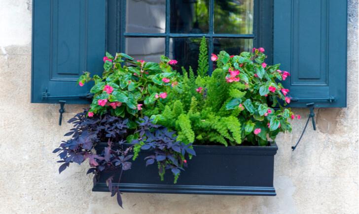 夏の寄せ植えを長く楽しむための管理のポイント
