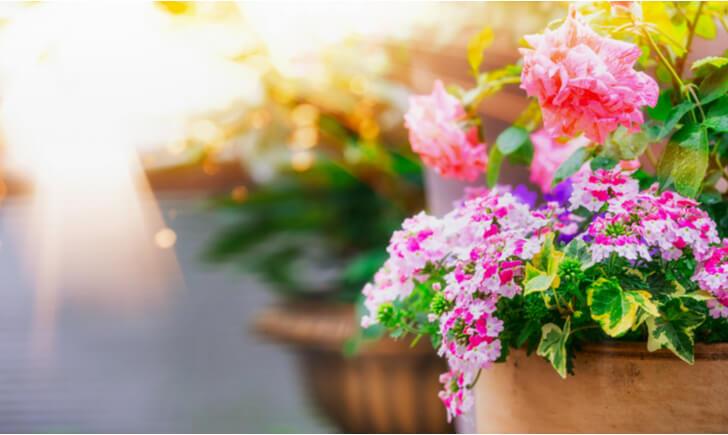 夏の寄せ植えであなただけの世界を表現してみよう