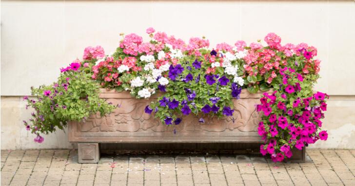 夏の寄せ植えにおすすめの植物9選!作り方や管理ポイントも