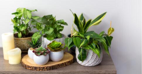 人工観葉植物おすすめ20選!手入れ不要の人気アイテム【室内・屋外】