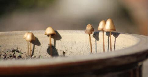 観葉植物の鉢にきのこが生えてくる原因と対処法|予防の対策や気になる疑問も