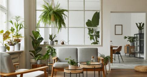 【大阪】オフィス用の観葉植物レンタルサービス4社!店舗別の導入メリットも