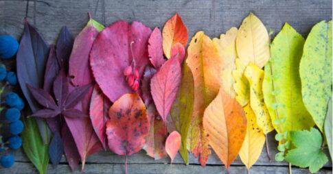 カラーリーフ人気の15品種!花壇や寄せ植え用の直射日光に強いおすすめのものは?