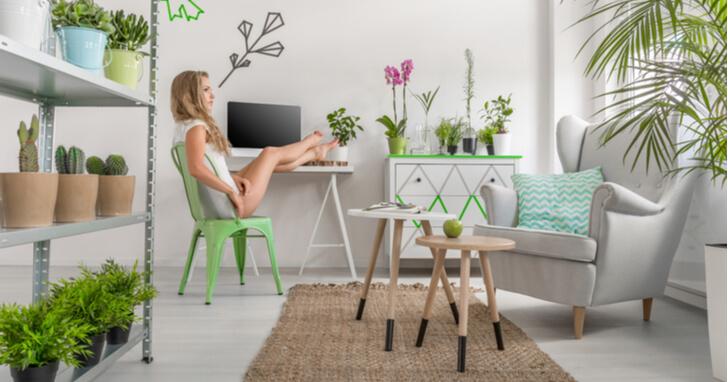 一人暮らしにおすすめの観葉植物10選!グリーンインテリアで部屋をおしゃれに演出
