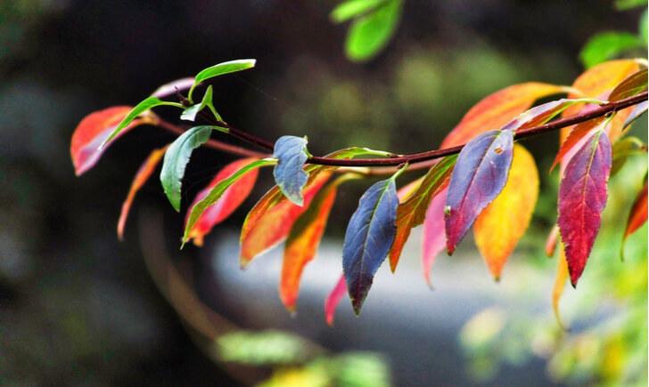 カラーリーフは「葉色を楽しむための植物」