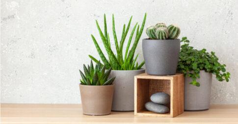 アマブロのアートストーンはおしゃれで機能的な植木鉢!使い方とおすすめを解説